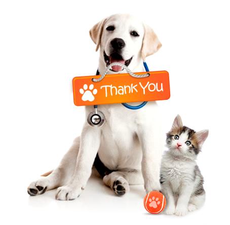 grazie-gatto-cane.jpg